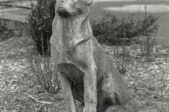 Der-Schaeferhund-von-Dr-Hermann-Anschuetz