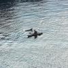 Kieler Flipper in der Schwentine vor der Schmerzklinik Kiel (3)