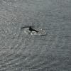 Kieler Flipper in der Schwentine vor der Schmerzklinik Kiel (8)