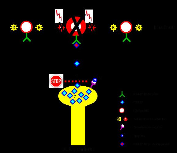 Migräneattackenbehandlung mit Triptanen und CGRP-Rezeptorantagonisten